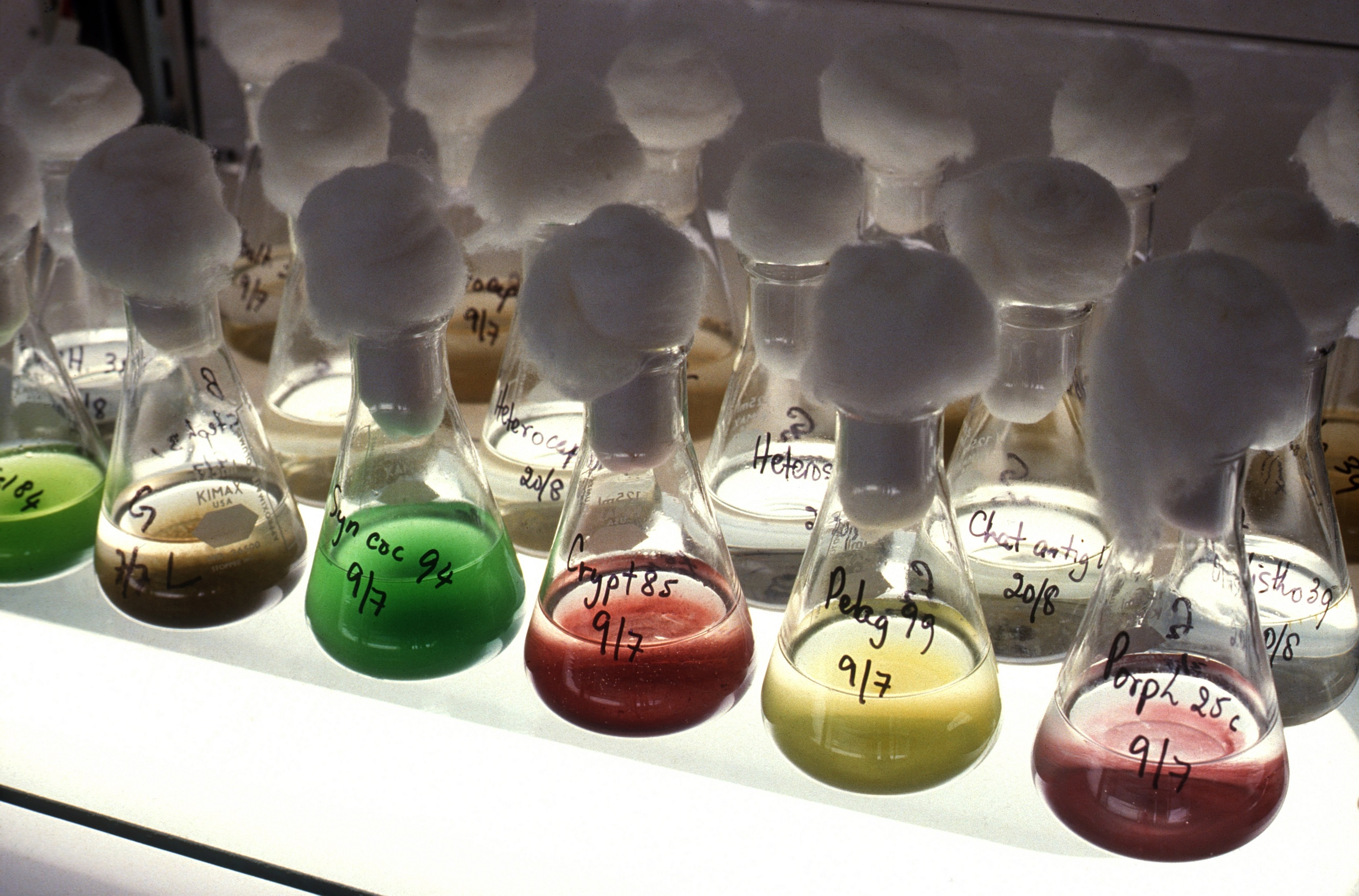 Mikroalgen_Microalgae cultures in the CSIRO Microalgae Collection laboratory._CC BY 3.0.jpg